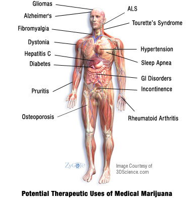 Therapeitic Uses of Cannabis